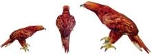 Papercraft imprimible y armable de un Águila Real / Golden Eagle. Manualidades a Raudales.